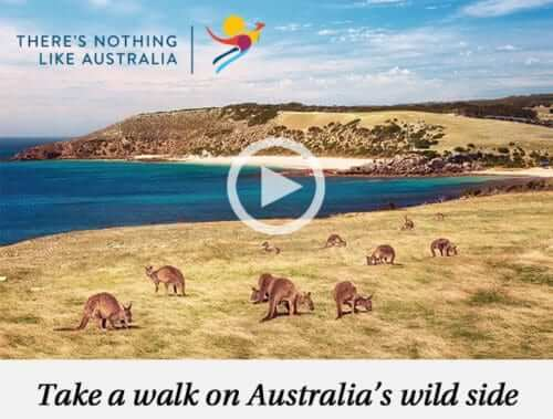 Take a walk on Australia's Wild Side