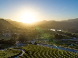 Carmel Valley Ranch Vineyard - Overview