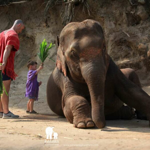 Wanna Tours Thailand - Elephant Owner For A Day - Chiangmai