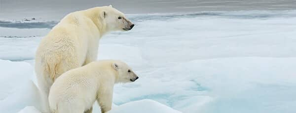 Seabourn Ultra-Luxury Cruises - ARCTIC EXPEDITIONS
